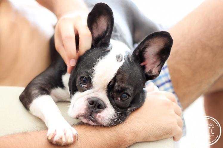 como-levar-cachorro-para-portugal (4)